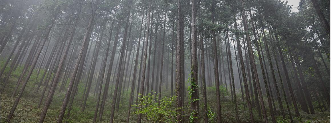 森林づくりの取組み